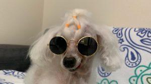 ホームセンター製のメガネをかけたマック 正面の写真