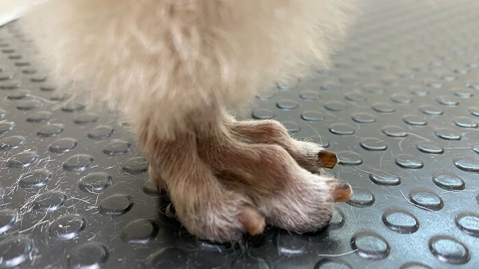 犬の爪切りの頻度|目安はこの長さをキープ!