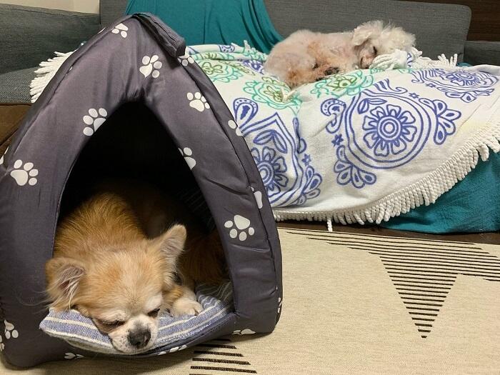 昨年の秋にダイソーで500円で購入したドーム型のペットベッド