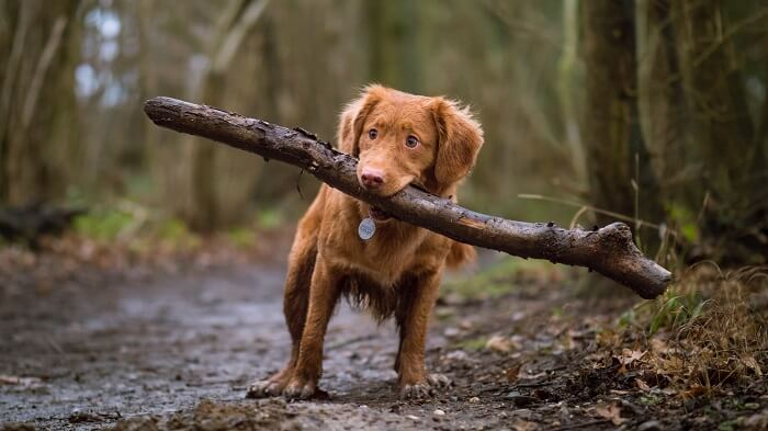 犬のイメージ写真2