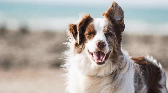 犬のイメージ写真