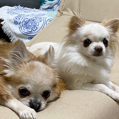 小太郎と京介の正方形の写真