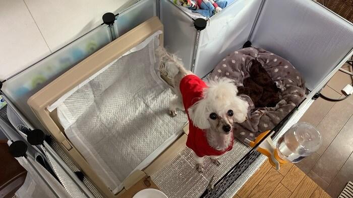 ダイソーのフリーマルチパネルで手作りした犬のサークル・ゲージの広さ