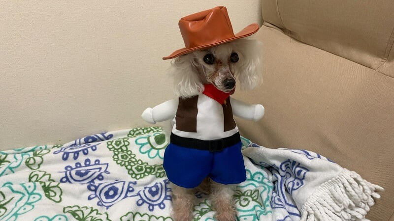 ダイソーの犬服|着ぐるみ『カウボーイ』は帽子が豪華!