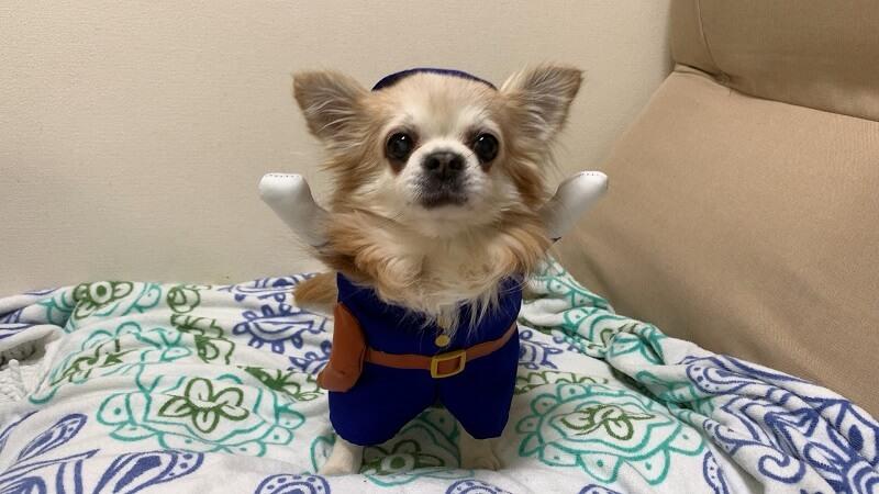 ダイソーの犬服|着ぐるみ『ポリス』は手を上げた感じが可愛い!