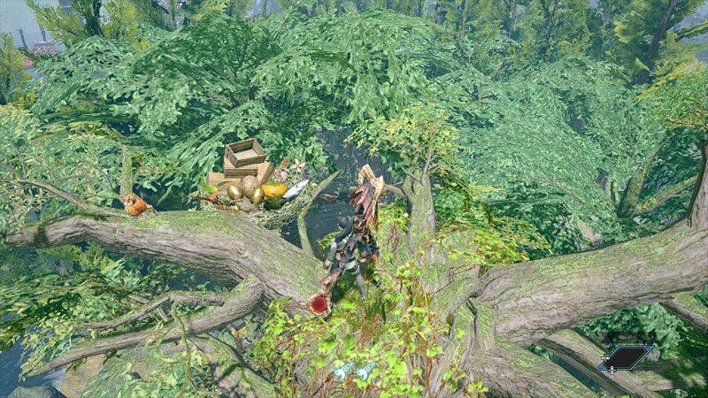 木の上のフクズクの巣