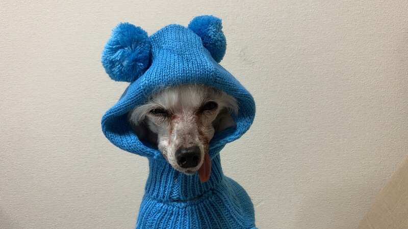Wishの通販アプリ 犬の服はサイズに注意!【測り方が日本と違った】