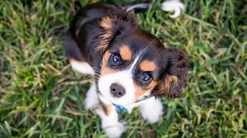 犬の初めてのトリミングで必要なもの、持っていくもの|トリマーが解説!