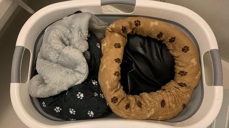犬・猫のペット用品の洗濯におすすめ 折りたたみたらい&バケツ