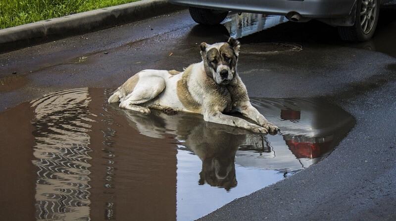 散歩で汚れた犬