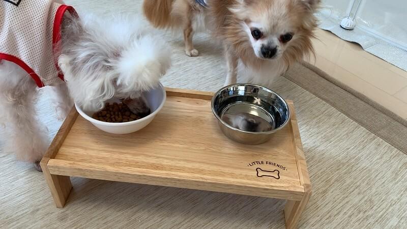 ダイソーの木製ペット用テーブルに群がる犬達