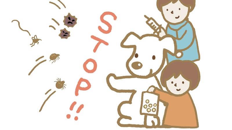 犬のノミの予防の仕方|トリマーが効果的だと判断する方法