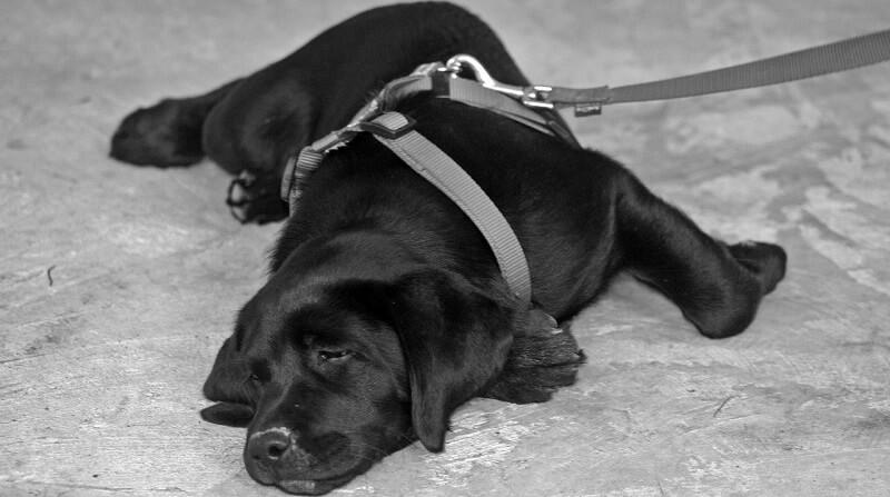 犬をベランダで飼うことはできる?