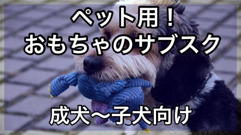 ペットのおもちゃのサブスク 成犬~子犬向けのおすすめ