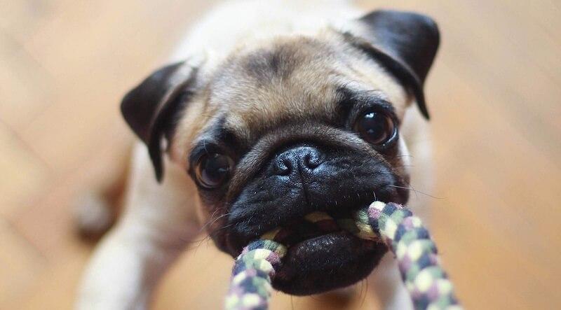 ペットのおもちゃのサブスク イメージ写真