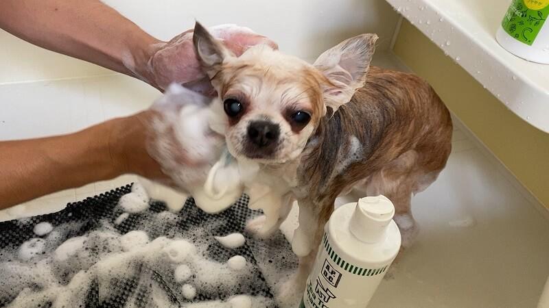 犬用ティーツリーシャンプーの泡は消えやすい